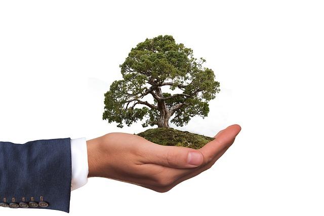 strom na dlani